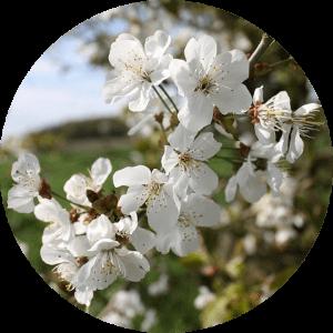 QiYoga – Frühlingselement Holz – auf zu Neuem